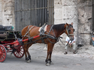 Here's a horse picture from outside the Colosseum